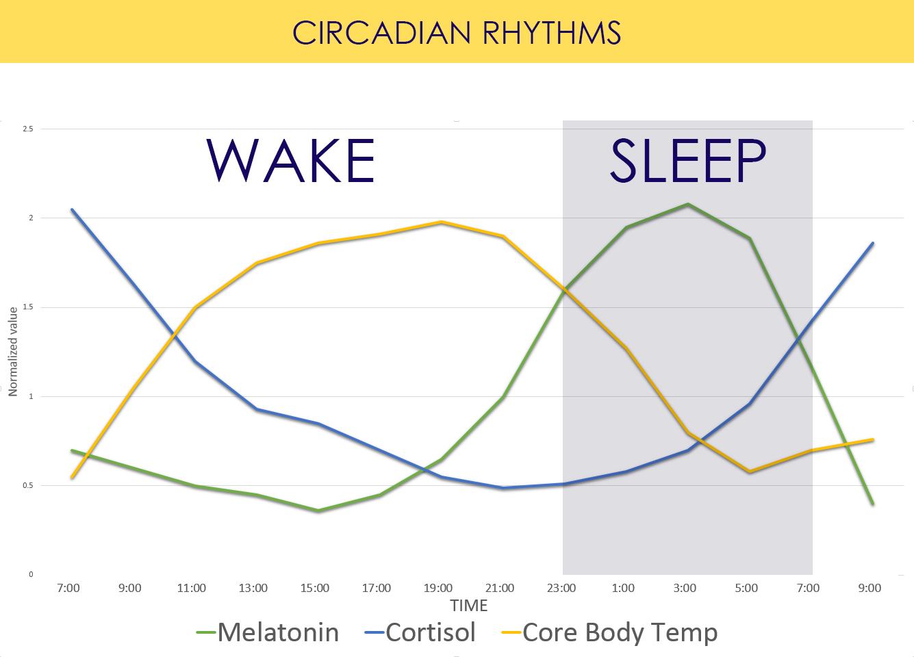 CIRCADIAN-HORMONES.jpg